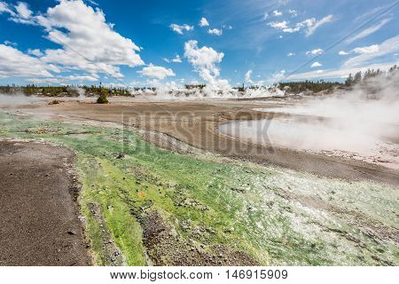 Green runoff of bacteria algae in Norris Geyser basin with hot springs pools steaming in Yellowstone National Park
