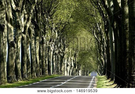 France a small country road lined with trees
