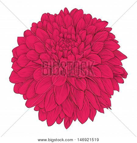 Beautiful flower Dahlia isolated on white background. . for design greeting cards and invitations of the wedding birthday Valentine's Day mother's day and other seasonal holidays
