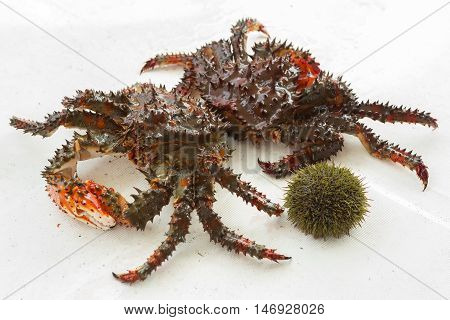 Freshly-Speared Kamchatka crabs and sea urchins on the deck of the yacht.