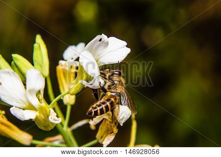 close up of Bee on flower nature backgrund