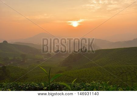 sunrise in the morning at tea plantation with soft mist