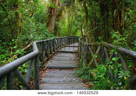 PASTO, COLOMBIA - JULY 3, 2016: small wood path in the middle of la cotora island.