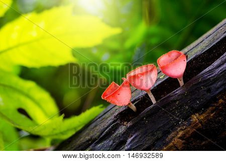 Mushrooms champagne in forest with green background