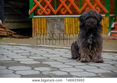 PASTO, COLOMBIA - JULY 3, 2016: black dirty dog standing in the street in a location close to la cocha lake.
