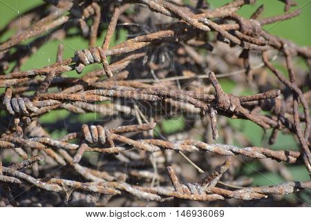Rusty and old barbed wire fence closeup
