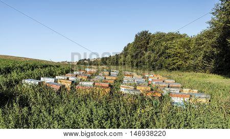 nomadic beekiping on a countryside alfalfa field