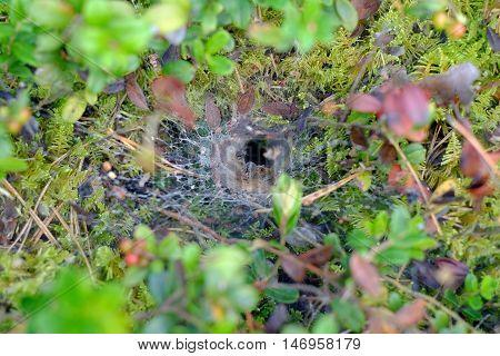 Spider's Lair, Web