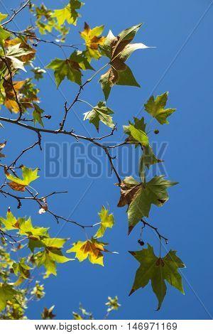 Park in autumn in Catalonia Spain Europe