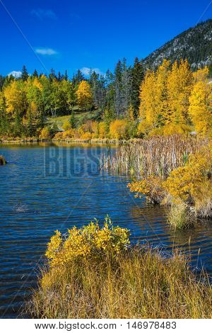 The lush golden autumn in lakes Vermilion. Concept of ecotourism. Canadian province of Alberta, the Rocky Mountains, Banff