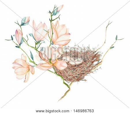 Illustration of the watercolor bird nest  with eggs on the magnolia tree branches, hand drawn isolated on a white background