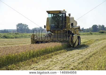 Mortara (PV) Italy - September 12 2016 - Harvesting and threshing rice in Lomellina
