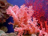 a beautiful coral in a sea aquarium poster