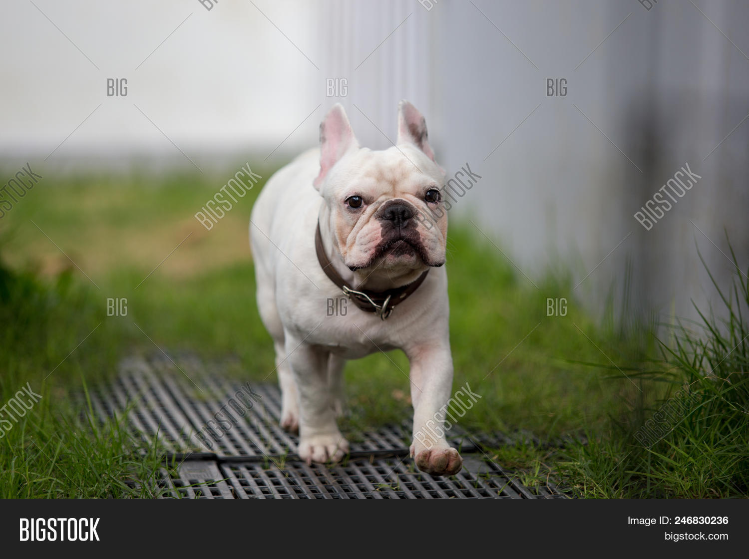 Cute Baby French Image Photo Free Trial Bigstock