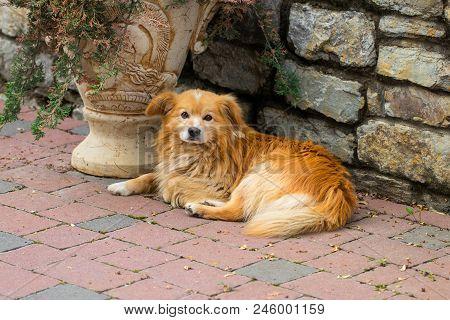 Dog Mongrel Dog Looking At The Camera