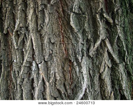 Bark,