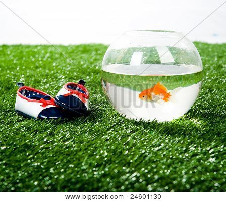 little aquarium and kid's slipper
