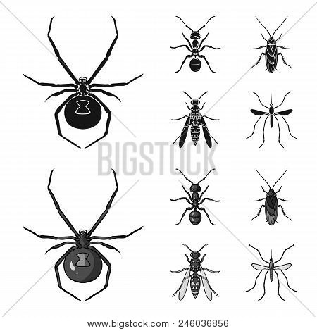 Spider, Ant, Wasp, Bee .insects Set Collection Icons In Black, Monochrome Style Vector Symbol Stock