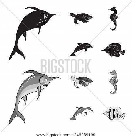 Merlin, Turtle And Other Species.sea Animals Set Collection Icons In Black, Monochrome Style Vector