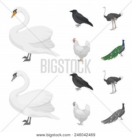 Crow, Ostrich, Chicken, Peacock. Birds Set Collection Icons In Cartoon, Monochrome Style Vector Symb