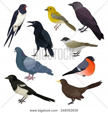 Set of different species of birds. Wildlife or fauna theme. Graphic elements for ornithology book, print or promo poster. Detailed vector icons. Colorful illustrations isolated on white background. poster