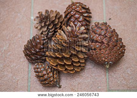 Pine Cones In The Area Of Alimini.