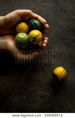 Female Hands Holding Yellow And Green Round Zucchini On Rustic Dark Background