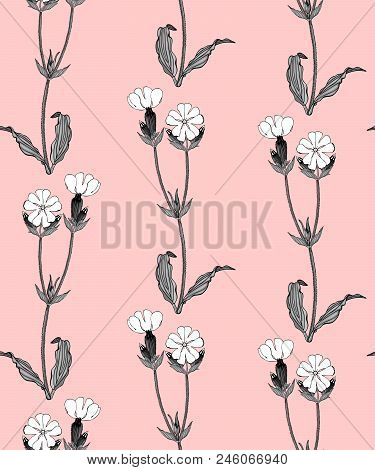 Seamless Pattern With Grayscale Campion Flowers On Pink Background Stock Vector Illustration.