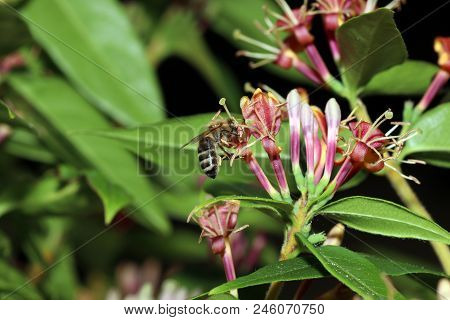 Wild Bees Are All Bee Species Of The Superfamily Apoidea With The Exception Of Honeybees And Not Abo