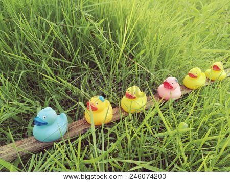 Colorful rubber ducks in a row