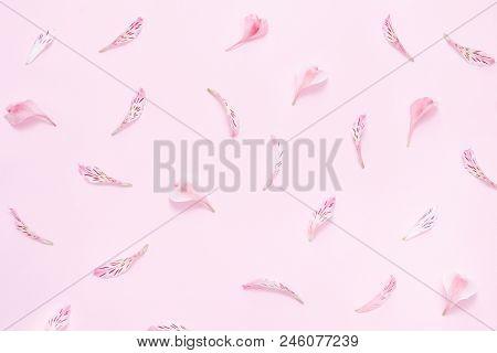 Flower Petals On A Pink Background. Gentle Spring Background