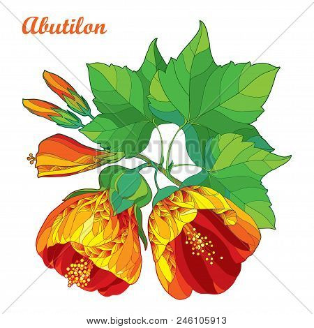 Vector Bouquet With Outline Ornate Abutilon Or Indian Mallow Flower In Orange, Bud And Green Leaf Is