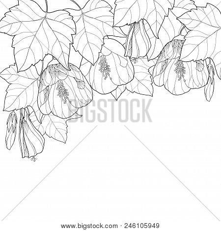 Vector Composition With Outline Black Abutilon Or Indian Mallow Flower, Bud And Leaf Isolated On Whi