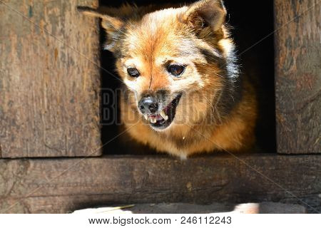 Angry Dog Of The Mongrel, Grins His Teeth In The Booth