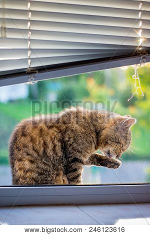The cat is washed, sitting on the window sill. Caring for cleanliness, daily washing poster