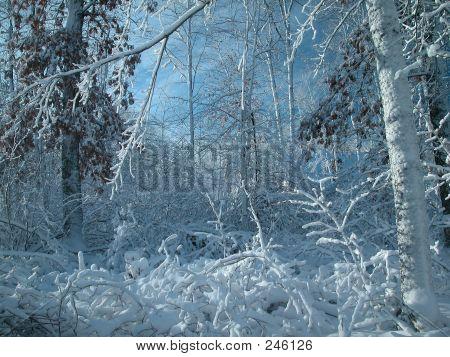 Snow Storm0011