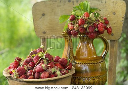 Old Clay Pot Full Of Fresh Red Strawberries And Ceramic Decorative Jug With Strawberries On The Chai