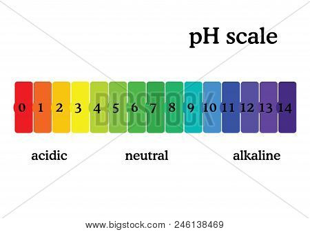 Ph Scale Diagram With Corresponding Acidic Or Alcaline Values. Universal Ph Indicator Paper Color Ch