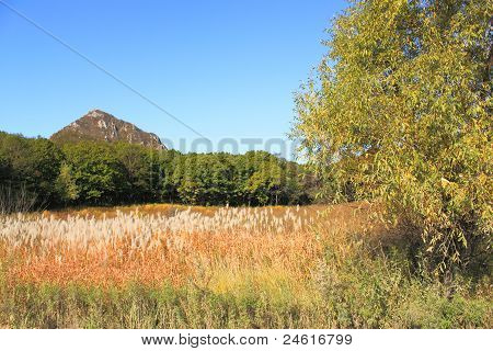 Turned Yellow Grass On  Fringe Of  Forest