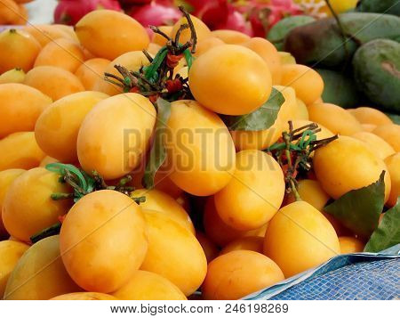 Plango Or Plum Mango, Marian Plum, Gandaria And Also Known As Ma-yong-chid The Tropical Fruit Of Tha
