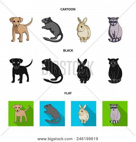 Puppy, Rodent, Rabbit And Other Animal Species.animals Set Collection Icons In Cartoon, Black, Flat