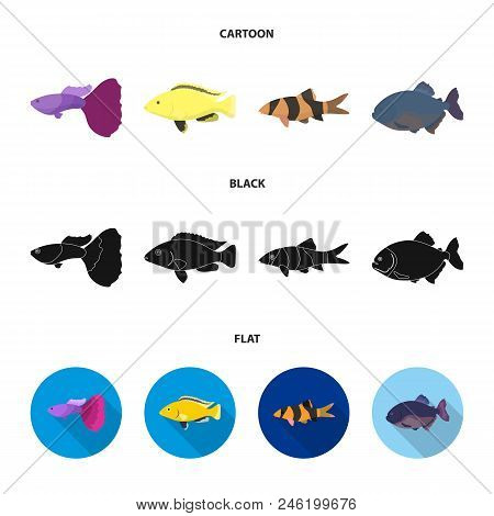 Botia, Clown, Piranha, Cichlid, Hummingbird, Guppy, Fish Set Collection Icons In Cartoon, Black, Fla