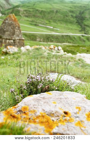 Purple Flowers With Grass Grow Near The Stone In The Foreground, Photo On The Background Of Stone Ho