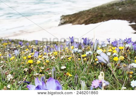 Purple, Blue, Yellow And White Flowers And Green Grass In The Foreground Against The Ice Lake And Sn