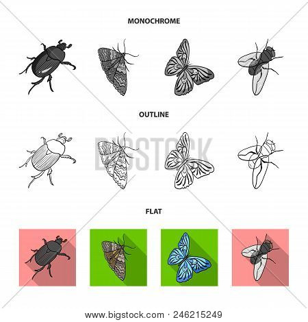 Arthropods Insect Beetle, Moth, Butterfly, Fly. Insects Set Collection Icons In Flat, Outline, Monoc