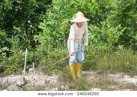 Asian worker cleaning farmland.