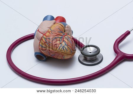 Human Heart Model And A Red Stethoscope On The Table  In The Medical Office