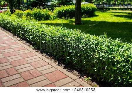 A Path Lined With Stone Tiles With A Bush Near The Lawn. Multicolored Path With Pavement Path