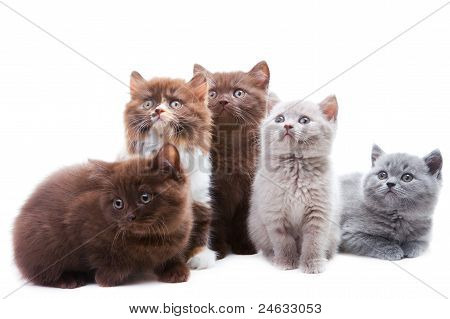 finding cat urine with uv light
