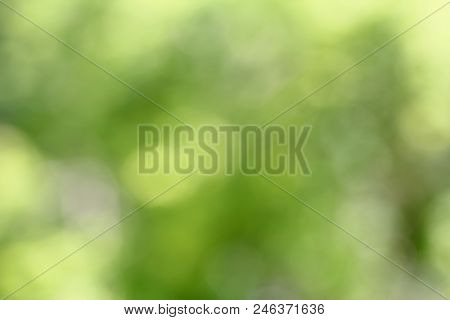 Abstract Circular Green Bokeh Background. Green Blurred Background With Bokeh Effect. Natural Green